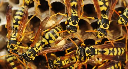 Come liberarsi delle vespe